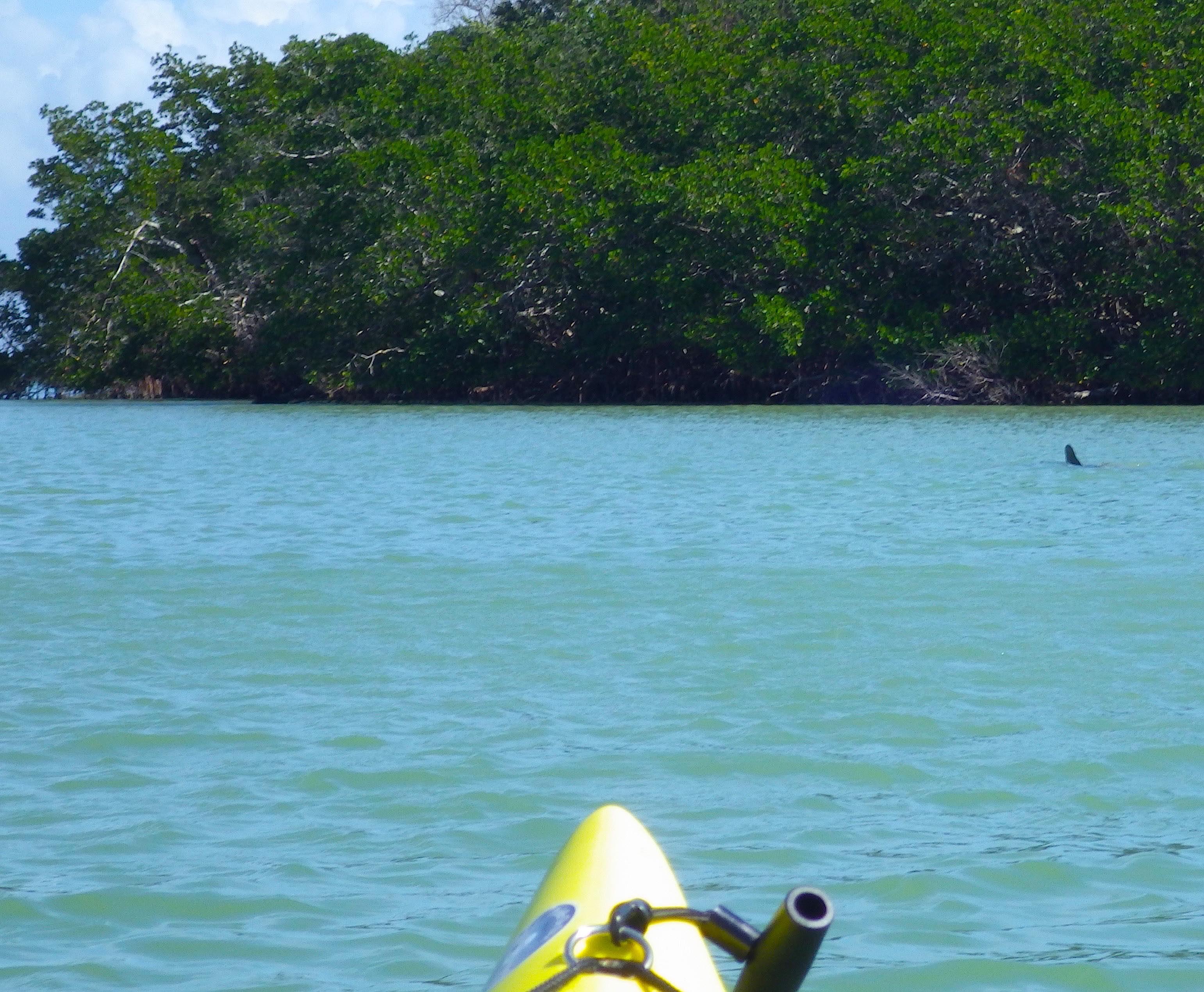 Circumnavigating sanibel island florida wind against current nvjuhfo Image collections